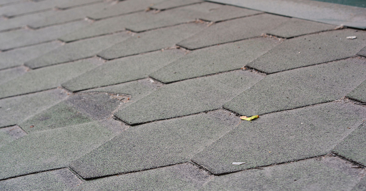 3 Ways Algae Affects Your Roof
