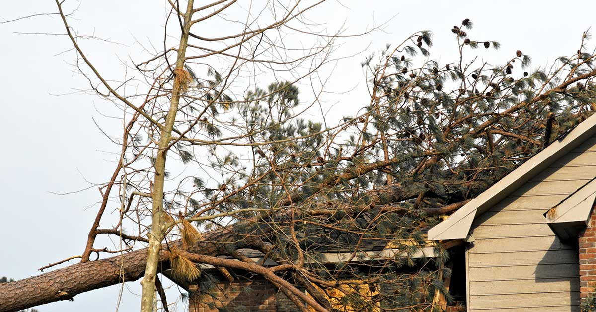 What You Should Do If A Tree Falls On Your Roof